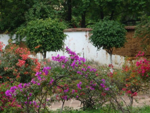 Flowers_in_the_courtyard