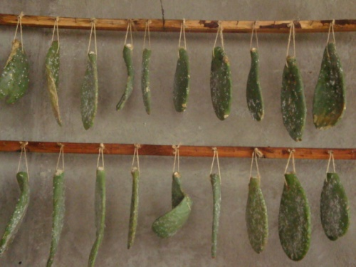 Nopal_leaves_hang_on_a_rack_in_rafaellas_workshop