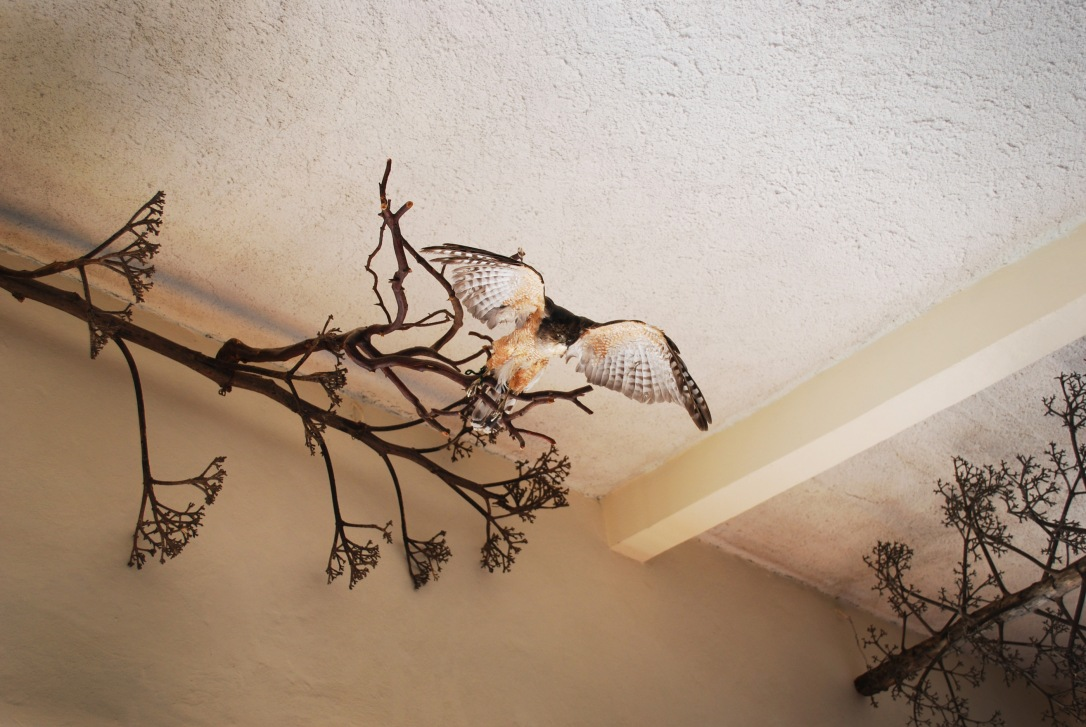 A ceiling view of Galeria Linda Zapoteca.