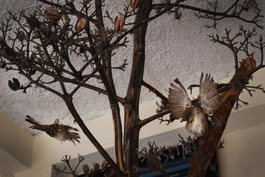 Detail shot of ceiling décor in Galeria Linda Zapoteca.