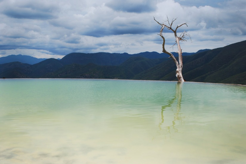 A tree stands over a natural infinity pool at Hierve el Agua.