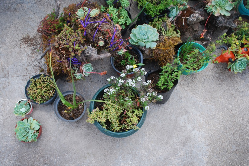 Cactus and succulent plants for sale by vendors at the fair.