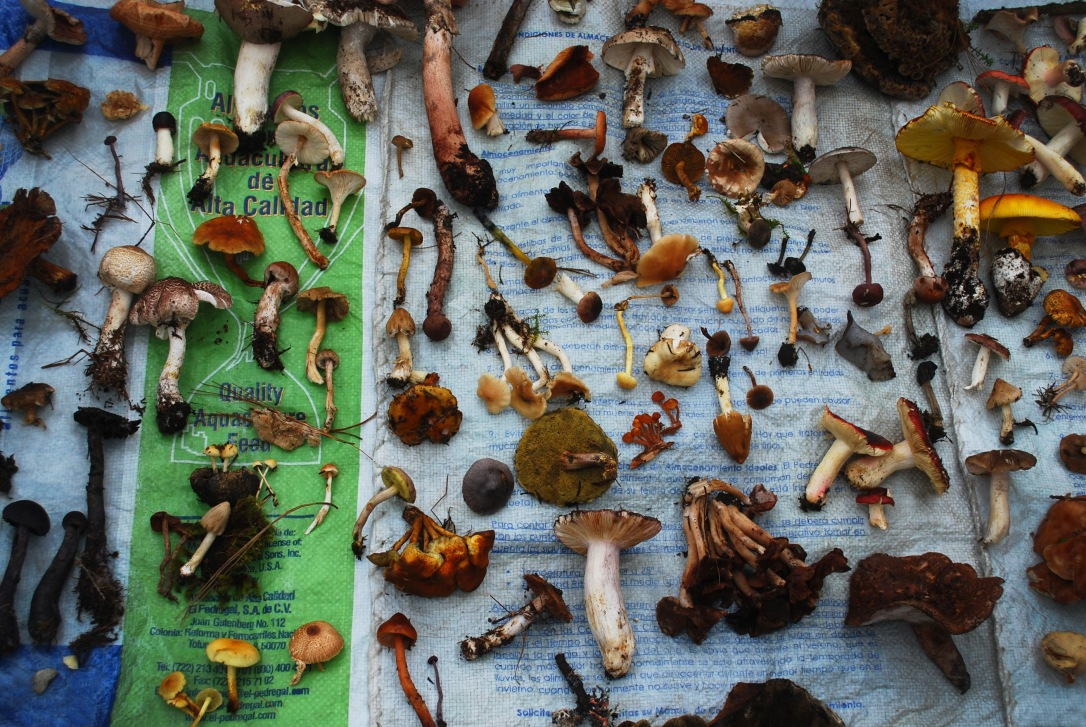 Selection_Mushrooms